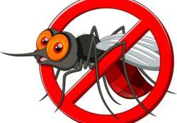 Les meilleurs produits anti-moustiques !